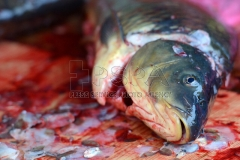 Selling and killing of carps in the open is a traditional part of Advent in Czech Republic