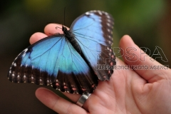 Exotic butterflies have been placed at the Butterfly House
