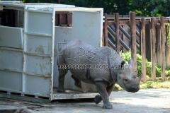 The Largest Ever Transport of Rhinos from Europe to Africa