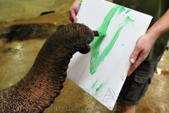 Delhi female Asian elephant with keeper Petr Kiebel, using a paint brush Painting elephant at Usti nad Labem Zoo