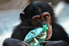 Female Shani - Kimani playing with plastic bottle