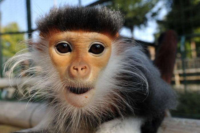 Nejkrásnější primát planety k vidění v Zoo Chleby